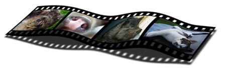 filmremsa_husdjur