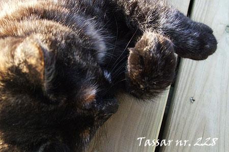 228_tassar