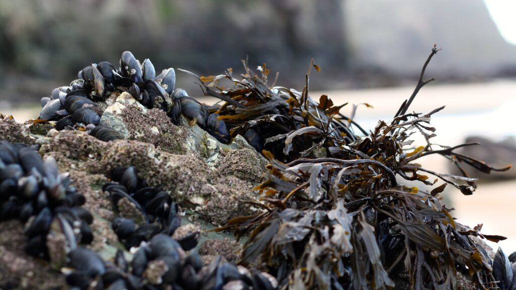 musslor-stranden