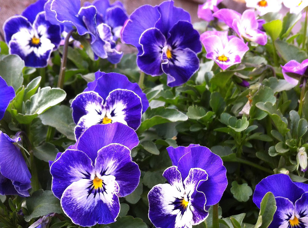 annafilipsson-blommor