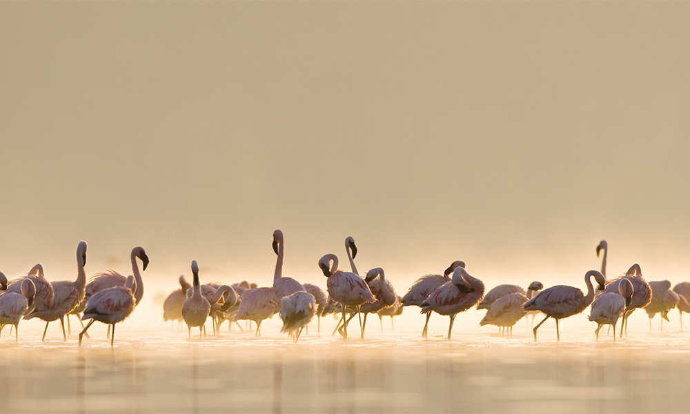 Det måste vara flamingons år i år!
