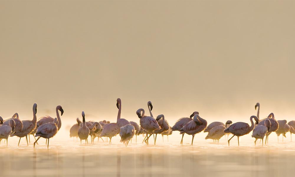 flamingons år 2017