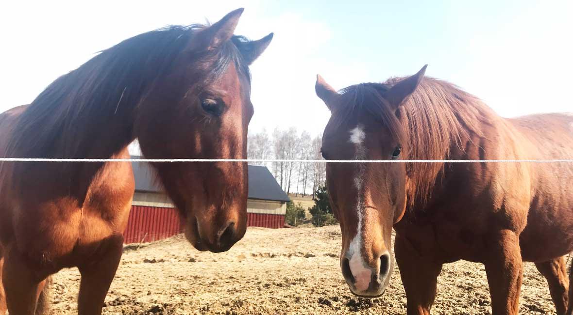 helg med hästar