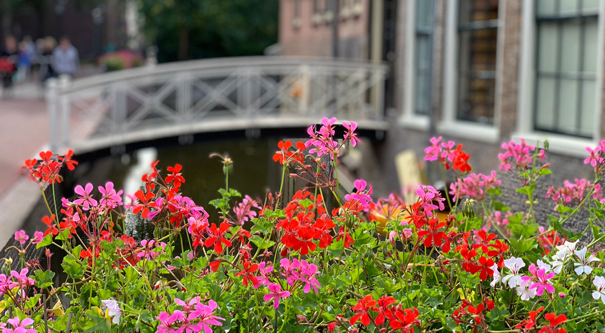 En blandning av bilder från Nederländerna