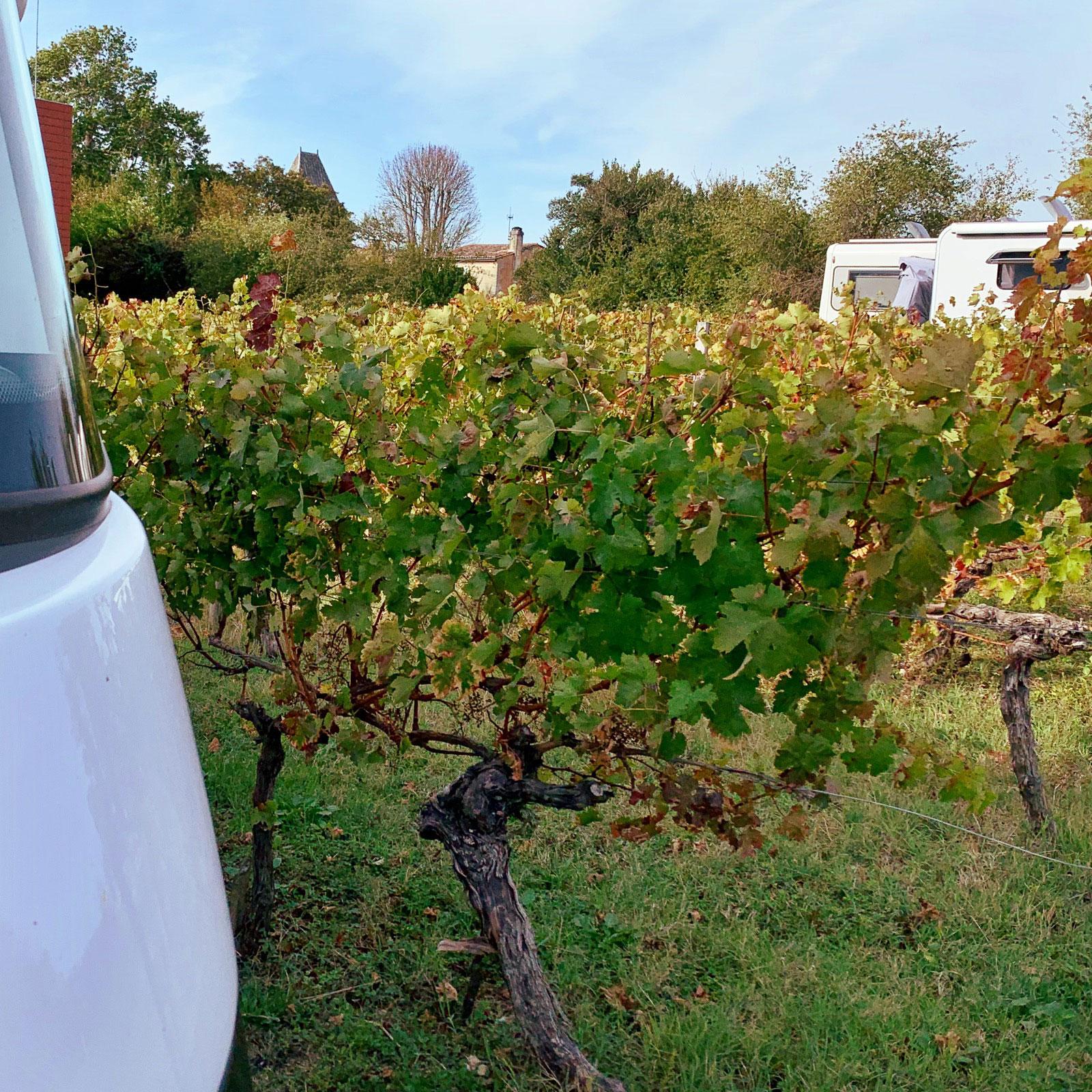ställplats på vingård