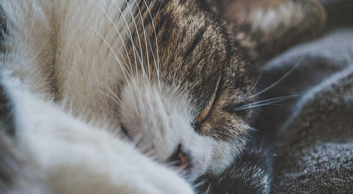 Sover dåligt när teknken bråkar