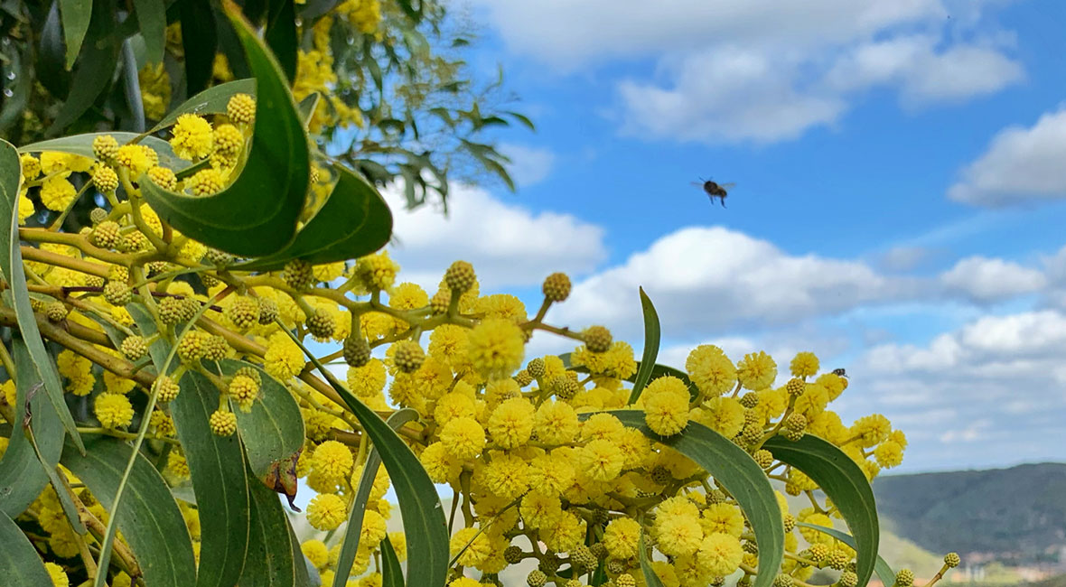 Det blommar ordentligt i Algarve