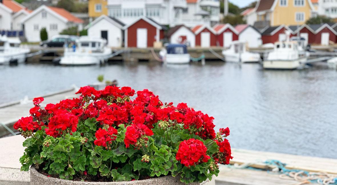 Några favoritbilder från Sverige
