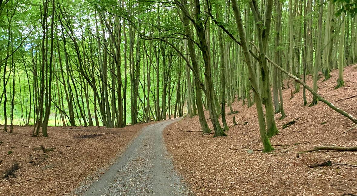 cykelväg östra tyskland