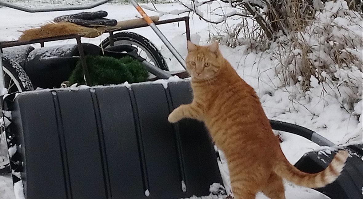Katten Skorven