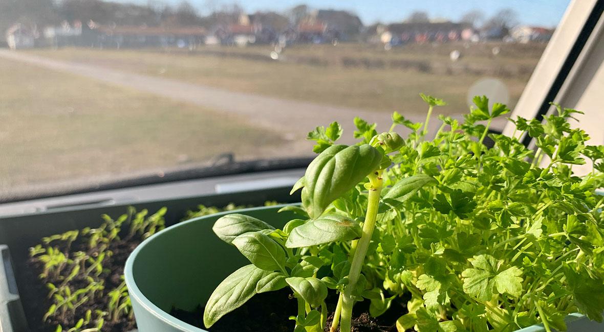 växthus i husbil