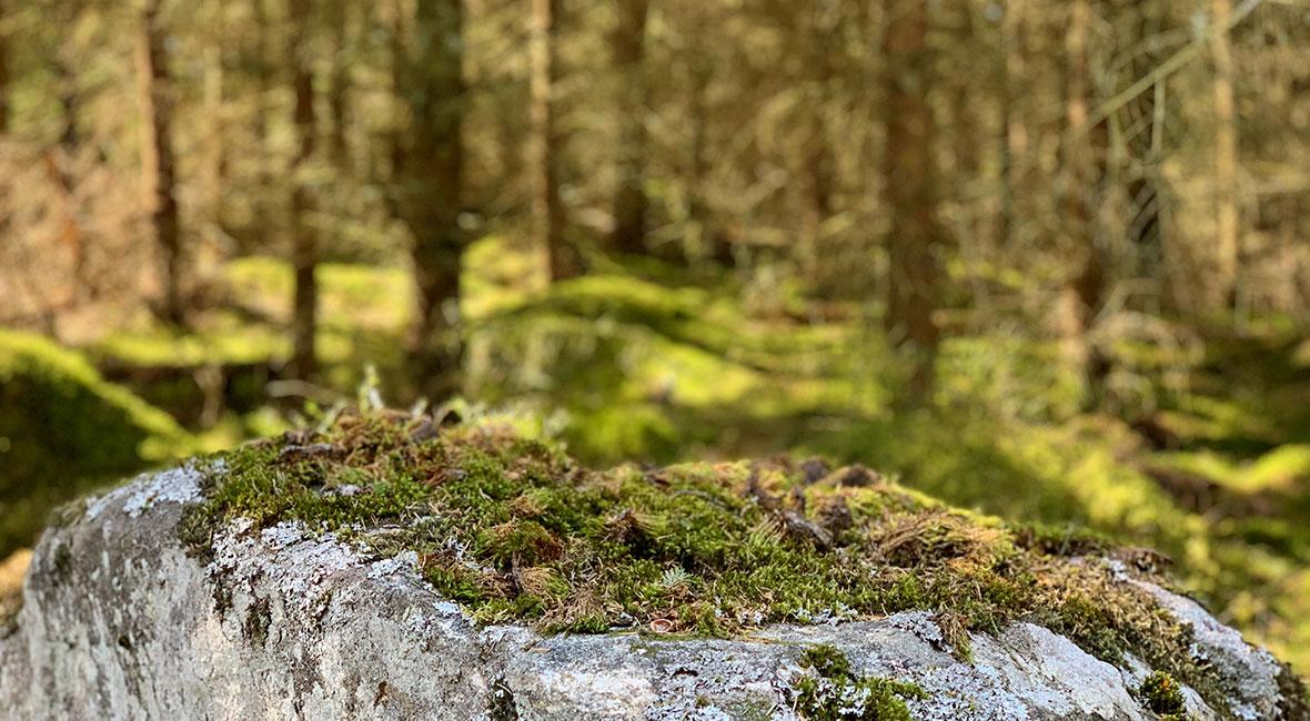 svensk landsbygd skog