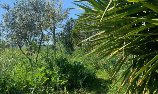 Trädkapning och flisarbete