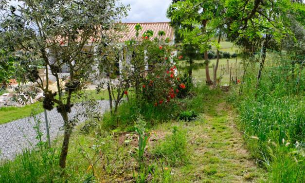 Många bilder från trädgården