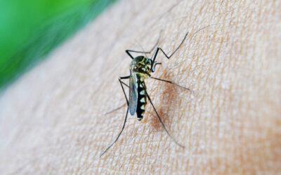 Minimera myggen