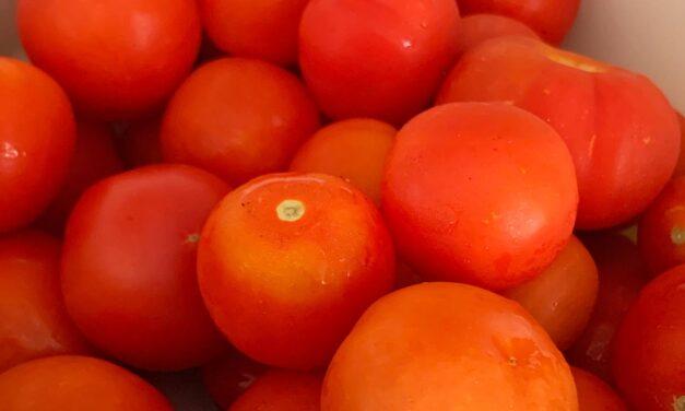 Så mycket tomater!