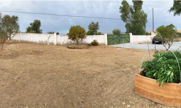 Projekt: Rensa hela köksträdgården